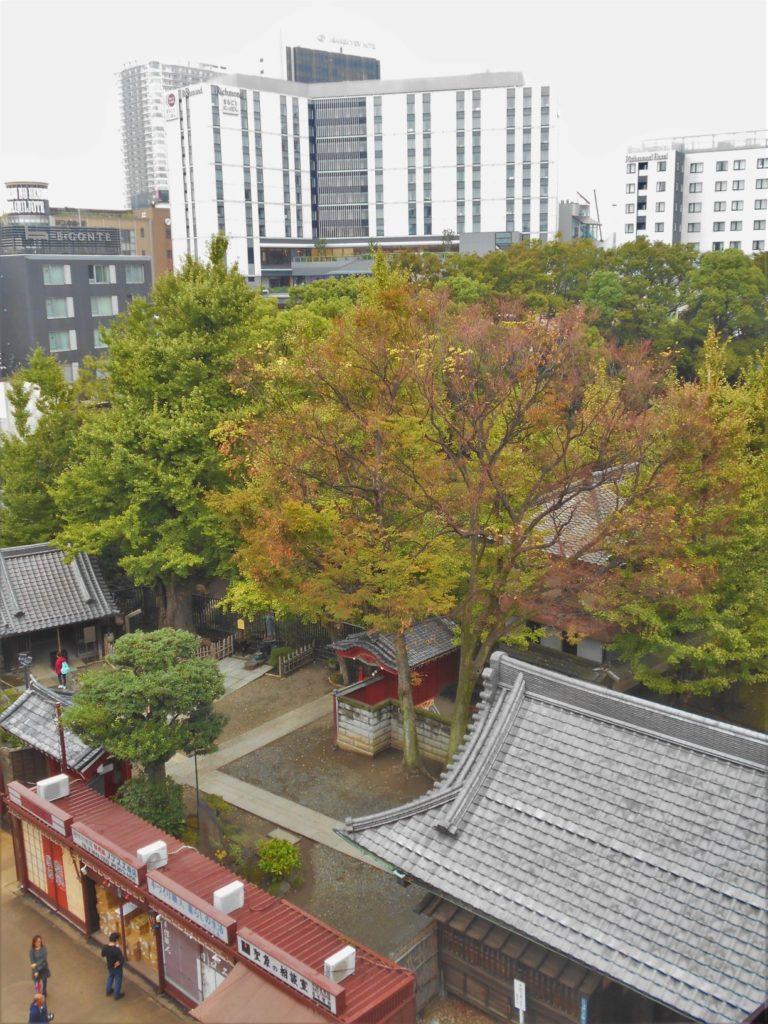 浅草公会堂内から見た秋の浅草の画像