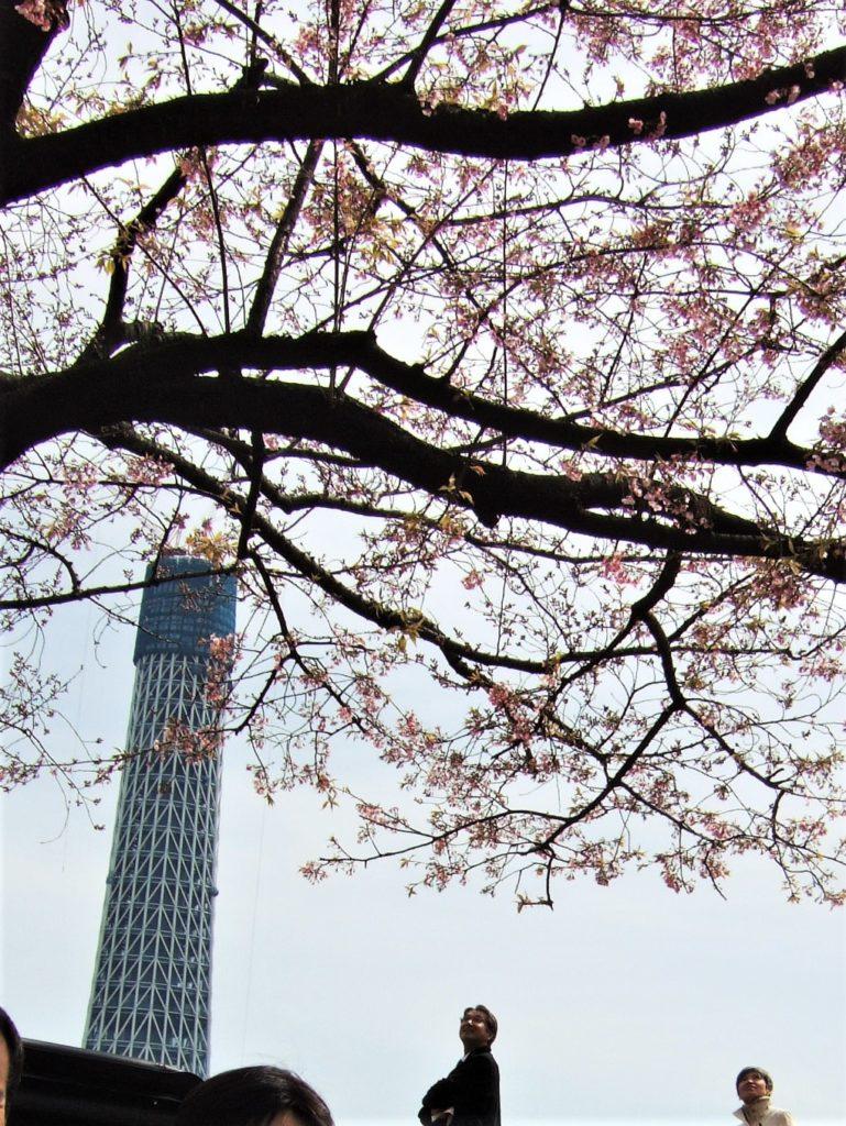 隅田川公園から見た建設中の東京スカイツリー(2009)の画像。