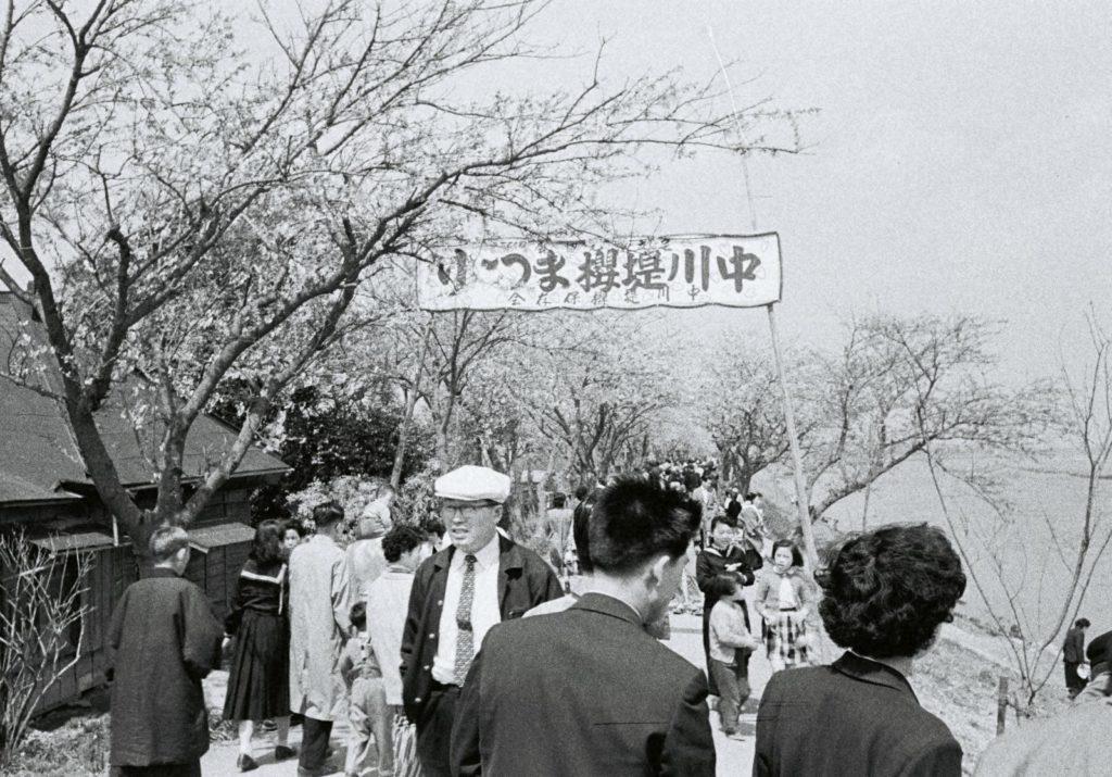 「中川堤の桜祭り」昭和32年(1957)の画像。