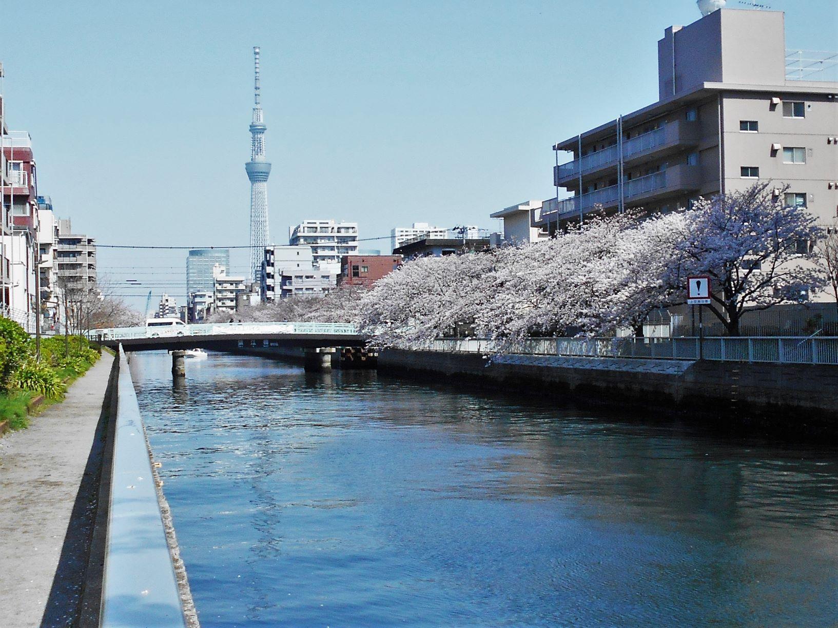 大横川に架かる猿江橋と東京スカイツリーの画像。